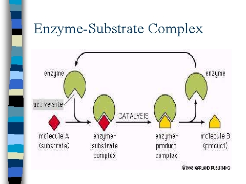 enzymes enzyme and enzymes substrate complex Basics of enzyme kinetics graphs how the various types of inhibitors are distinguished by whether they bind only to the free enzyme, only to the enzyme-substrate complex producing parabolic curves when reaction rate is graphed as a function of substrate concentration enzymes that.