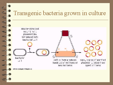 biology coursework bacteria