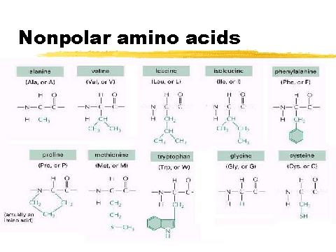 Amino Acids - Chemistry Department - Elmhurst College