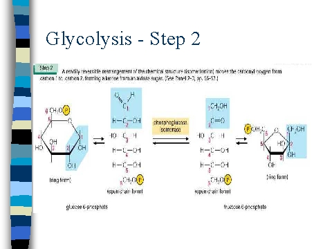 Glycolysis - Step 2